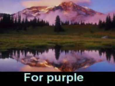 For Purple